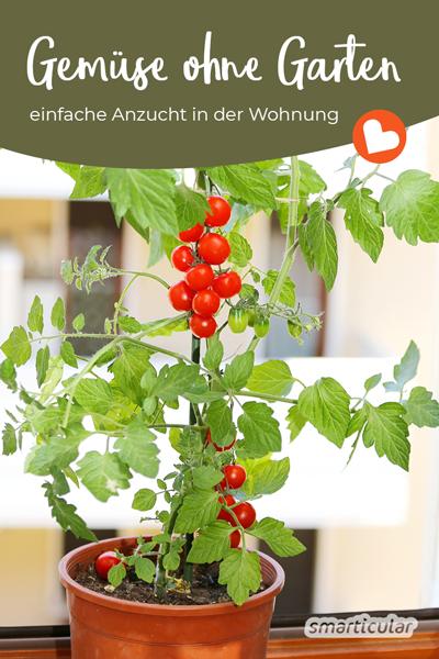 Wer keinen eigen Garten hat, muss auf den Anbau des eigenen Gemüses nicht verzichten. Viele Gemüsesorten lassen sich problemlos auch in der Wohnung ziehen.