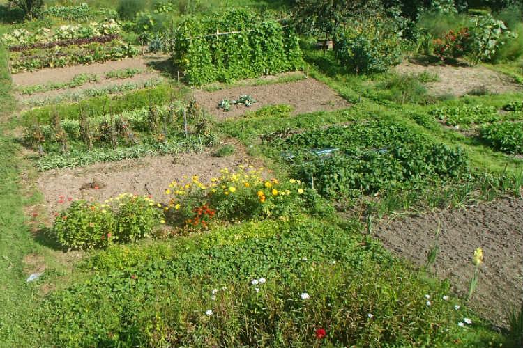 Geld sparen mit eigenem Gemüsegarten