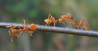 Diese natürlichen Hausmittel helfen gegen Ameisen