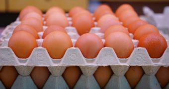 3 mal getestet: Wie weiß ich wann ein Ei schlecht ist?