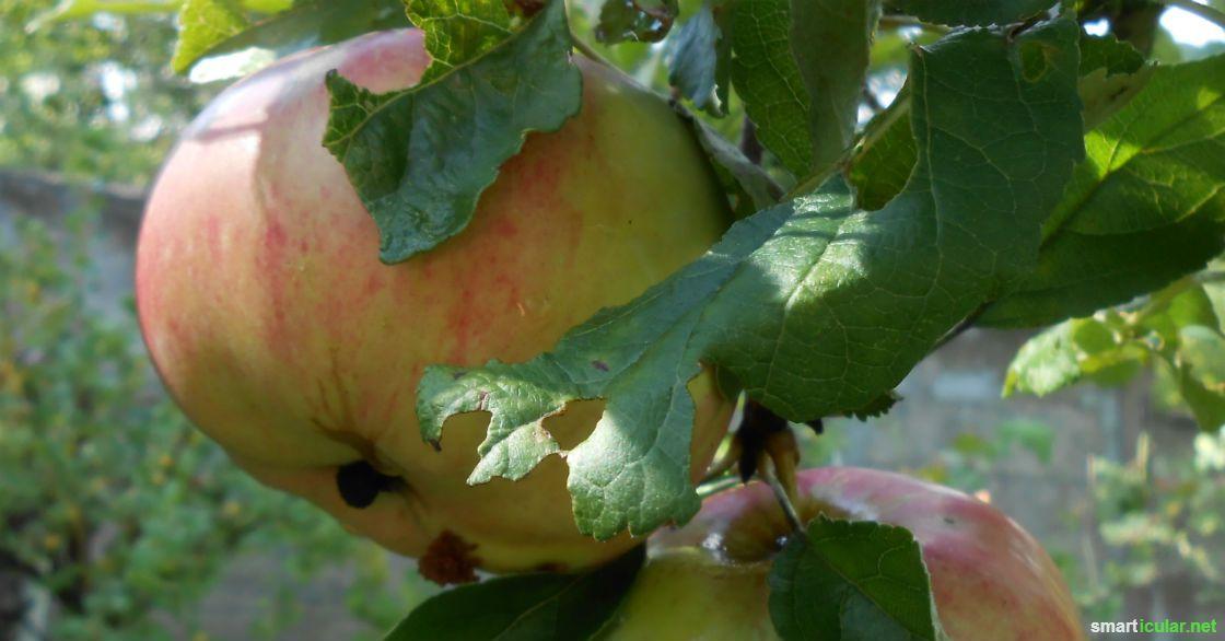 Trockene & fettige Haut behandeln mit einer natürlichen Apfelmaske