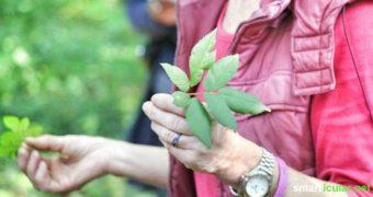 Wildkräuterwanderung: Natürliche Ernährung neu erlernen!