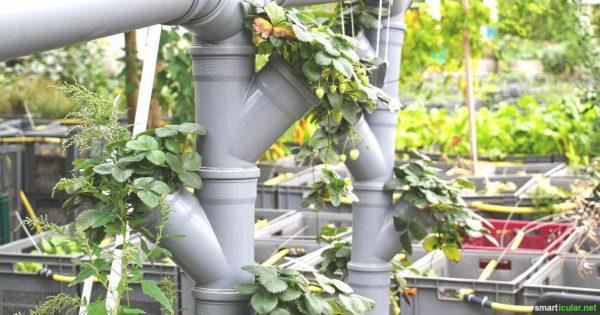 """3 Wege in """"fremden"""" Gärten zu sähen und zu ernten"""