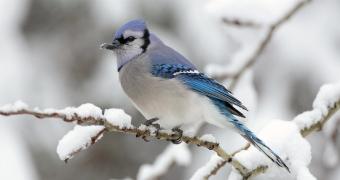 Vogelfutter preiswert und originell - 5 kreative Ideen