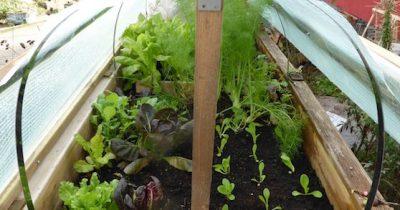Hochbeet mit Grablicht beheizen - für frisches Gemüse selbst im Winter!