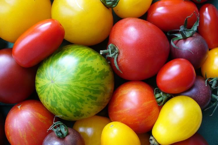 Als Kleinbauer zur Artenvielfalt beitragen ist einfacher als gedacht. Durch Samentauschbörsen kannst du alte und seltene Sorten züchten und weitergeben.