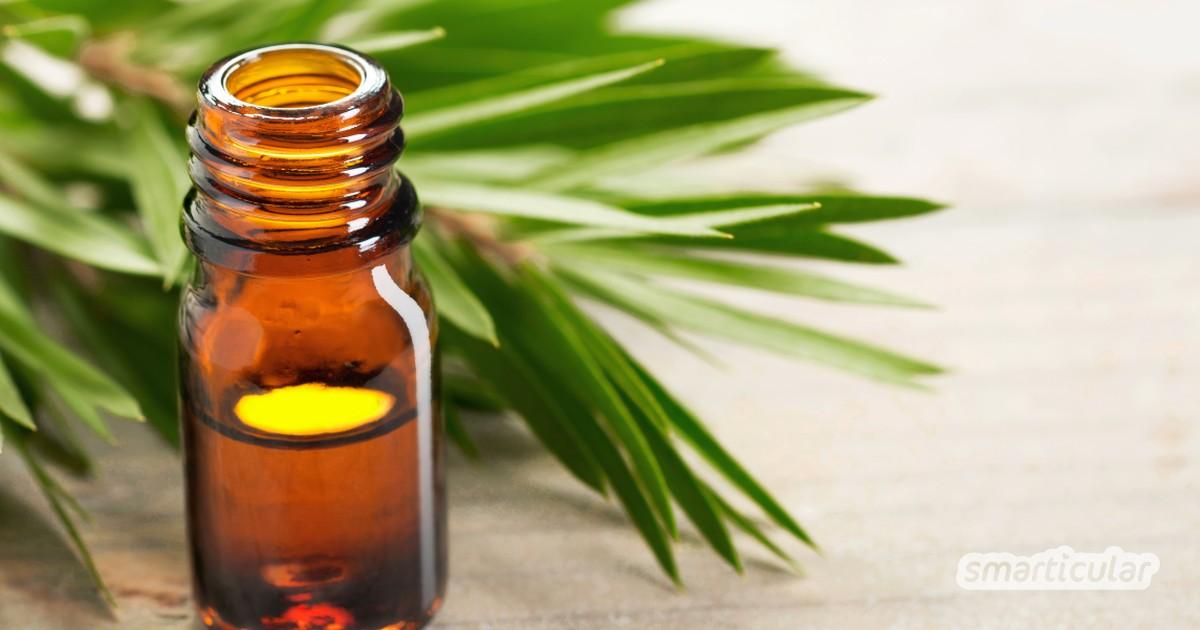 Teebaumöl ist ein besonderes ätherisches Öl und leistet gute Dienste in selbstgemachten Pflegeprodukten und Haushaltsreinigern.
