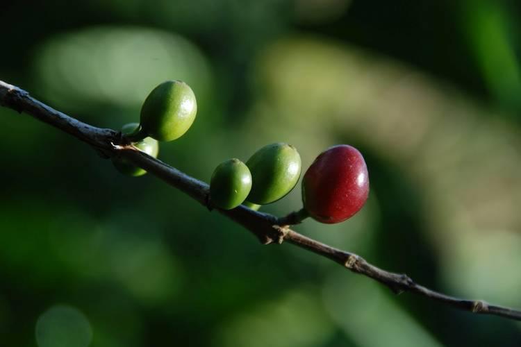 Kaffee richtig genießen: gib ihm etwas Zeit sein Aroma zu entfalten. Schnellgepresster Espresso und Kapselkaffe reichen nicht. Probiere diese Methode aus!