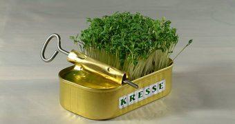 Wird dein Garten nicht rechtzeitig grün für Ostern? Mit diesem Trick ziehst du dir etwas Ostergras schnell in der Wohnung!