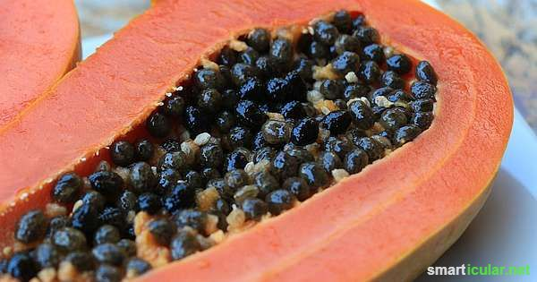 Papaya-Kerne kannst du leicht trocknen und für das feine und gesunde Würzen vieler Speisen verwenden. Ein wahrer Schatz für das gesunde Kochen!