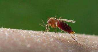 Vermeide Jucken, Schwellungen und Entzündungen durch Mückenstiche und andere Insektenstiche mit diesen Mitteln! Natürliche Lösungen für die Soforthilfe!