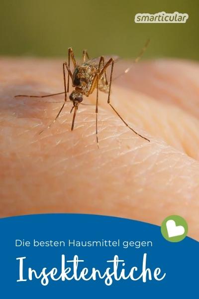 Um Insektenstiche zu behandeln, eignen sich zahlreiche Naturheilmittel. Hier findest du die besten Hausmittel gegen Insektenstiche!
