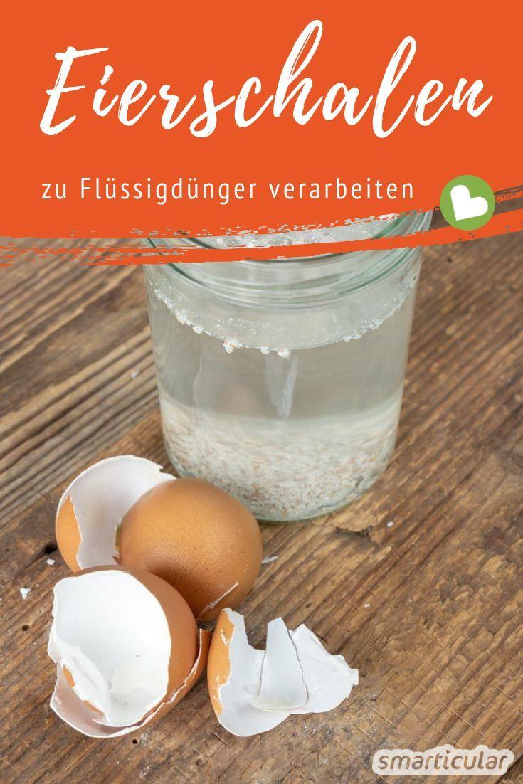 Eierschalen sind reich an Kalk und Mikronährstoffen. Mit wenig Aufwand und etwas Wasser wird daraus ein praktischer Flüssigdünger.