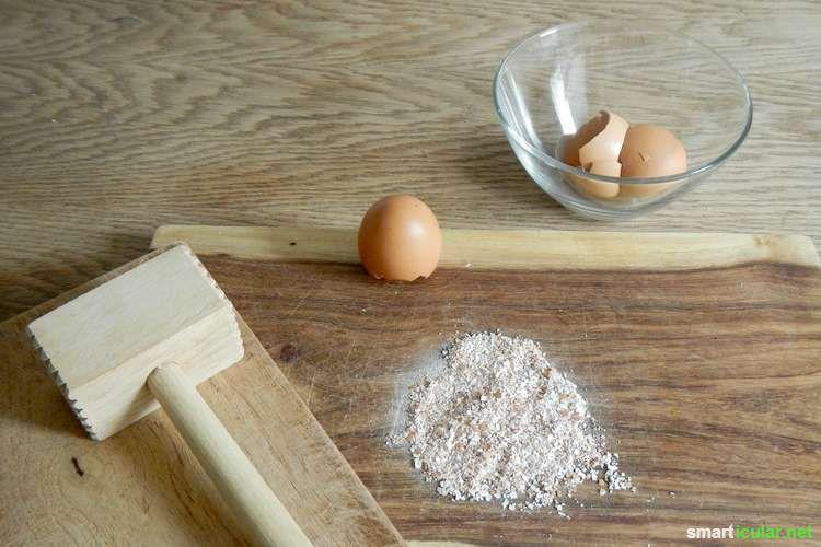Eierschalen sind reich an Kalzium und anderen Nährstoffen. Manche Zier- und Nutzpflanzen freuen sich riesig drüber! So stellst du den Eierschalendünger her!