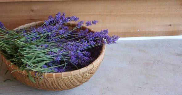 Es gibt wenige so universell nützliche Pflanzen wie Lavendel. In diesem Beitrag zeigen wir dir unsere Lieblingsanwendungen!
