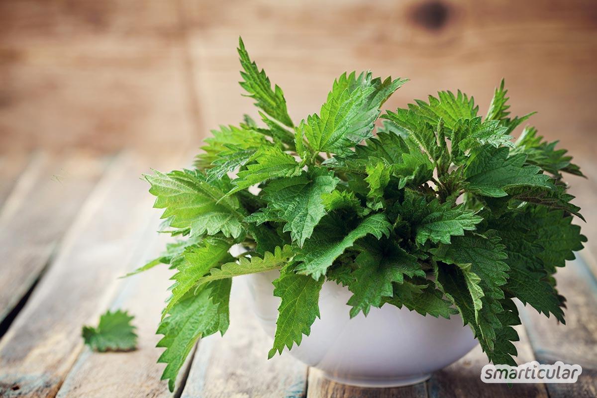 Die Brennnessel ist eine der vielfältigsten nutzbaren Wildpflanzen und unglaublich gesund! Lerne Rezepte kennen und erfahre, wie du sie sonst noch nutzen kannst.