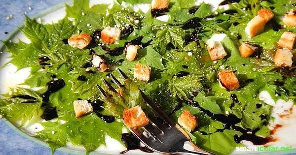 Ahorn ist nicht nur für Sirup gut! Mit den schmackhaften Blättern dieses tollen Baumes kannst du einen nahrhaften, gesunden Salat zaubern!