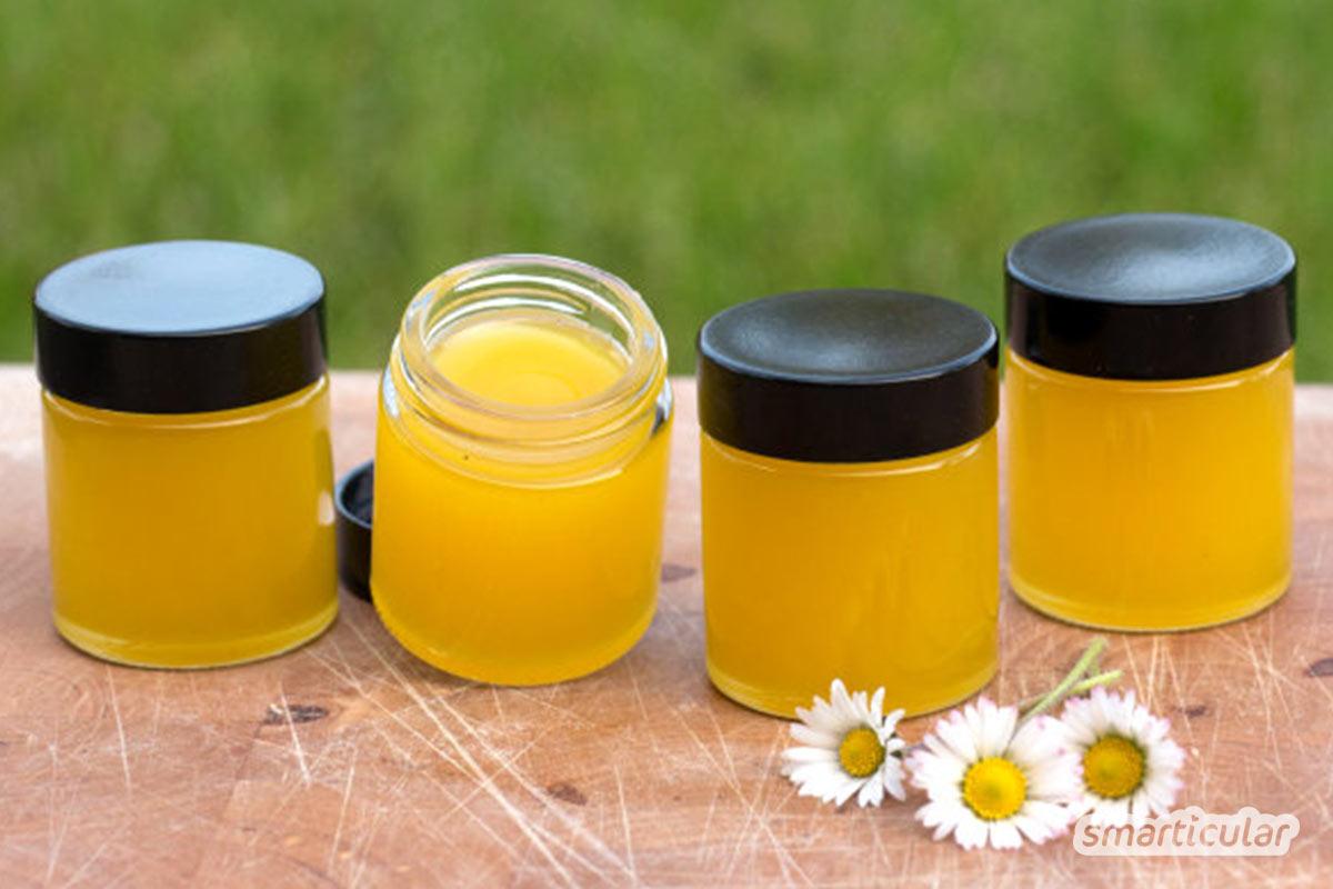 Das Gänseblümchen, auch Bellis Perennis oder Tausendschön genannt, schmeckt gut im Salat und hat viele Heilwirkungen, die du sehr einfach nutzen kannst.