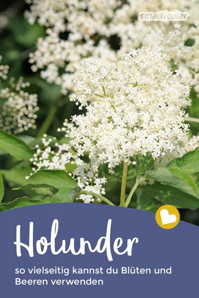 Der Holunder blüht und erfreut die Gemüter! Dabei ist tut er nicht nur der Seele gut, sondern auch dem Körper. Entdecke leckere Anwendungen für die Blüten!