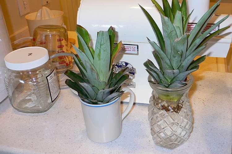 16 tricks um pflanzliche k chenabf lle in neue gesunde pflanzen zu verwandeln. Black Bedroom Furniture Sets. Home Design Ideas