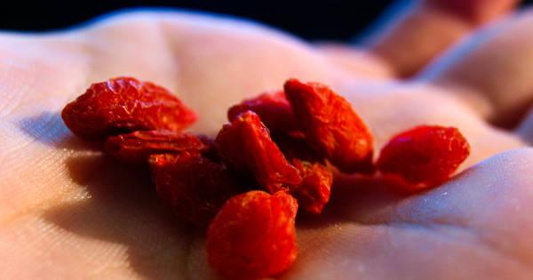Goji-Beere als Ergänzung zu deinem Speiseplan: Vollgepackt mit Vitaminen, Antioxidantien und anderen Nährstoffen! Im Smoothie, Muffin oder als Zuckerersatz.