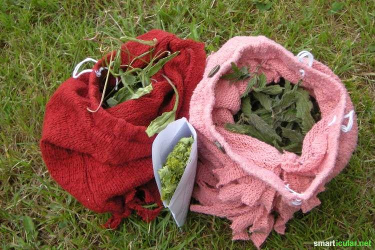 Im Sommer blüht es überall und Freunde der Wildkräuter sammeln was das Zeug hält. Hier verraten wir dir die besten Methoden zur Aufbewahrung für den Winter!