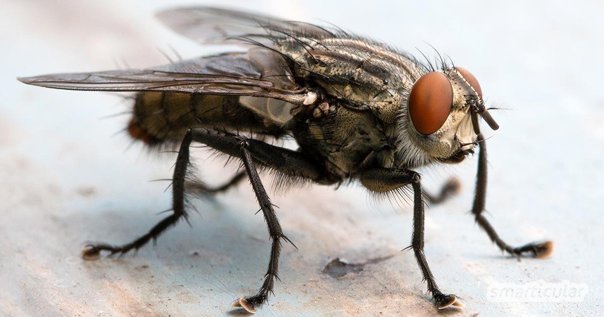 8 Mittel Gegen Fliegen Und 3 Selbstgebaute Fliegenfallen