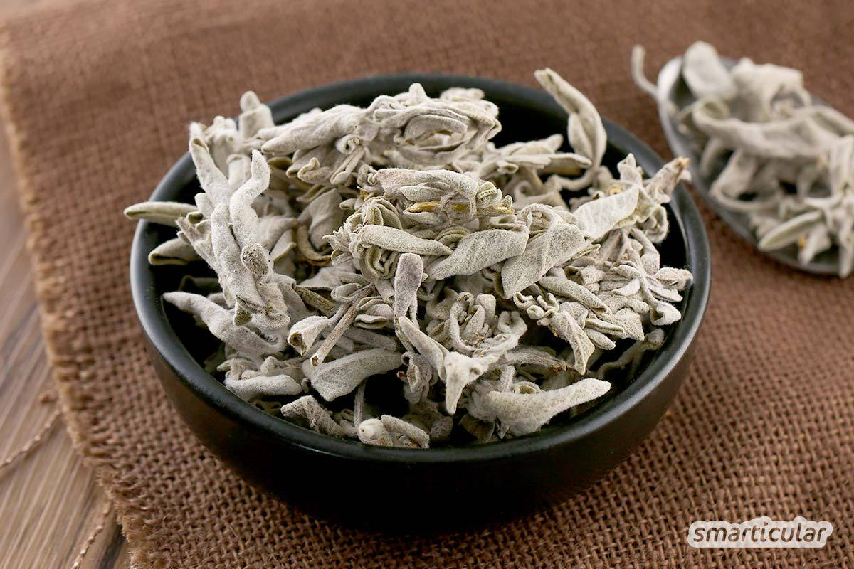 Salbei wird in Form von Salbeitee oder Salbeibonbons vielfältig für die Gesundheit verwendet. Und auch als Küchenkraut würzt er Gerichte wie etwa Salbeinudeln - ein wahres Wunderkraut!
