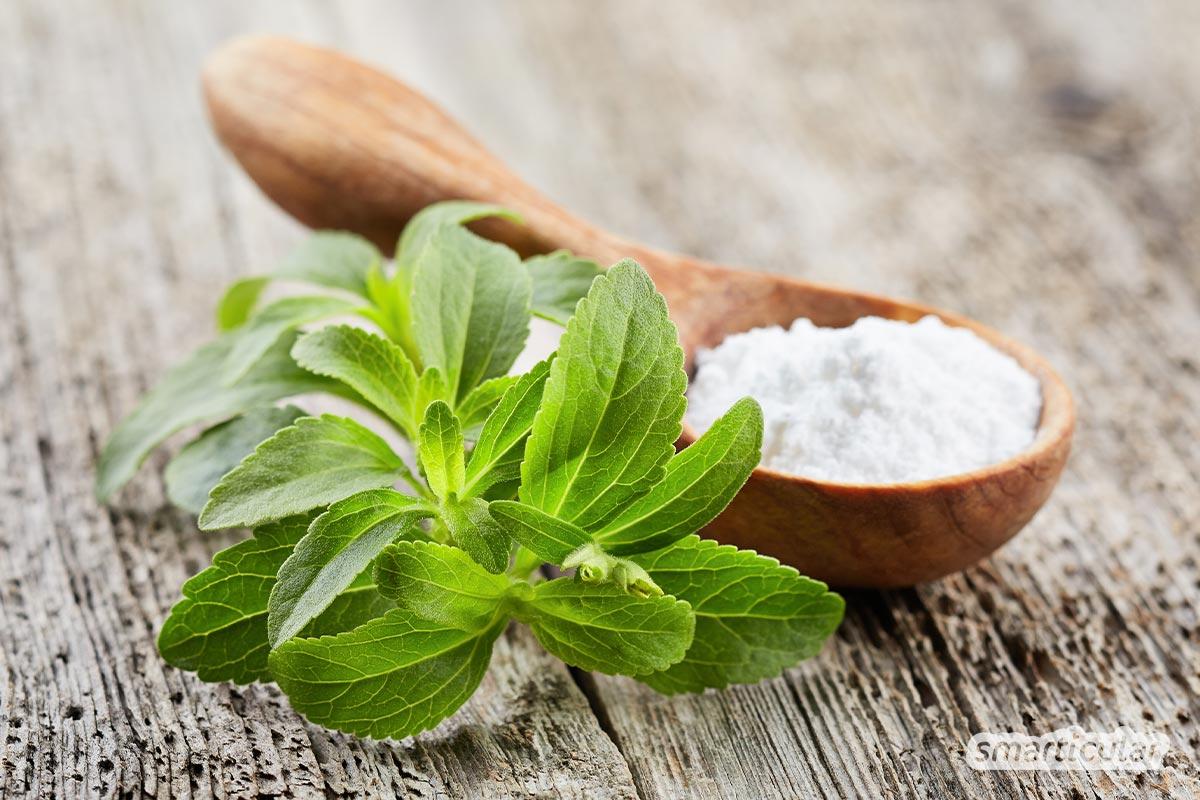 Mit Zuckerersatz gesünder leben: Mit diesen Zucker-Alternativen musst du auf den süßen Geschmack nicht verzichten. Die besten Süßungsmittel im Vergleich!