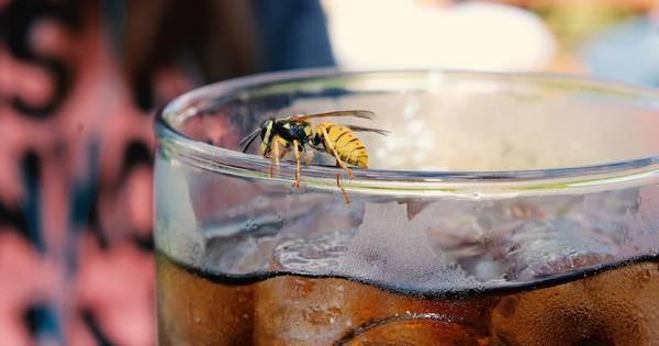 Mücken, Wespen, Fliegen, Ameisen und Blattläuse- mit diesen natürlichen Tricks hältst du die lästigen Garten- und Balkon-Besucher leicht und nachhaltig fern