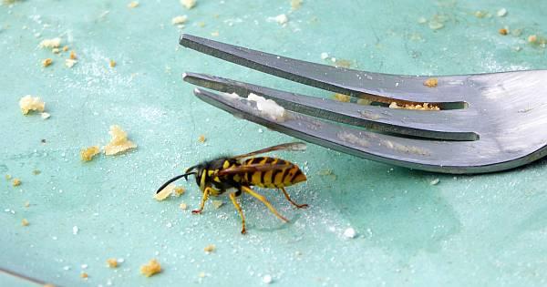 Wespen Vertreiben wespen vertreiben effektiv und schonend mit diesen tricks