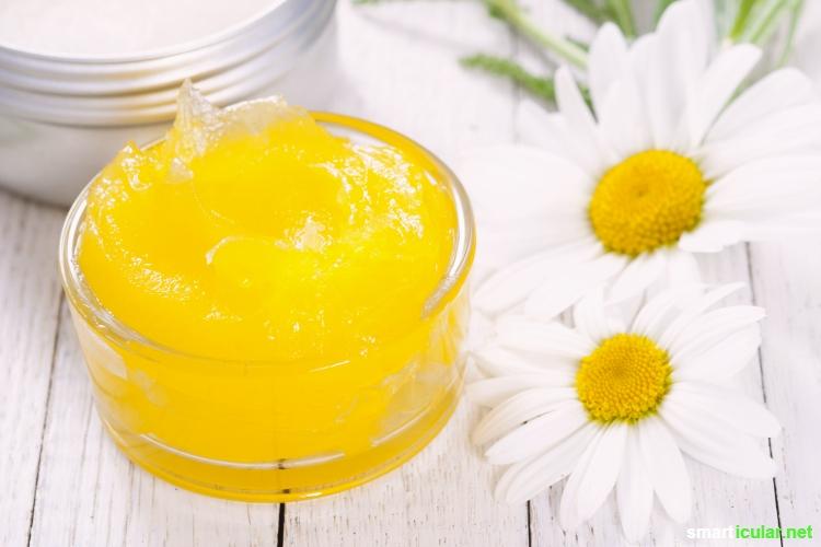 hte Kamille (Matricaria chamomilla) - erkennen, sammeln, vielseitig und leicht für deine Gesundheit anwenden. z.B. als Tee, in einer Salbe oder Tinktur!