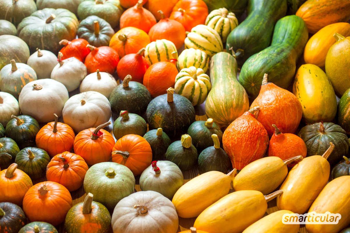 Der Saisonkalender August verrät dir, welche regionale Obst- und Gemüsesorten jetzt reif sind -  zum Beispiel Äpfel, Birnen, Kürbisse und Mais.
