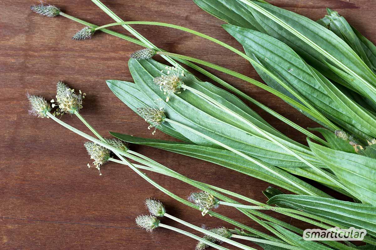 Im August kannst du in der Natur viel ernten! Entdecke gesunde, nährstoffreiche Wildpflanzen, Kräuter und Früchte für Küche und Gesundheit.