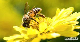 Du bist um die Bienen besorgt und unterschreibst jede Petition? Diese 13 Dinge kannst du im Alltag unternehmen, um das Leben der Bienen zu erleichtern.