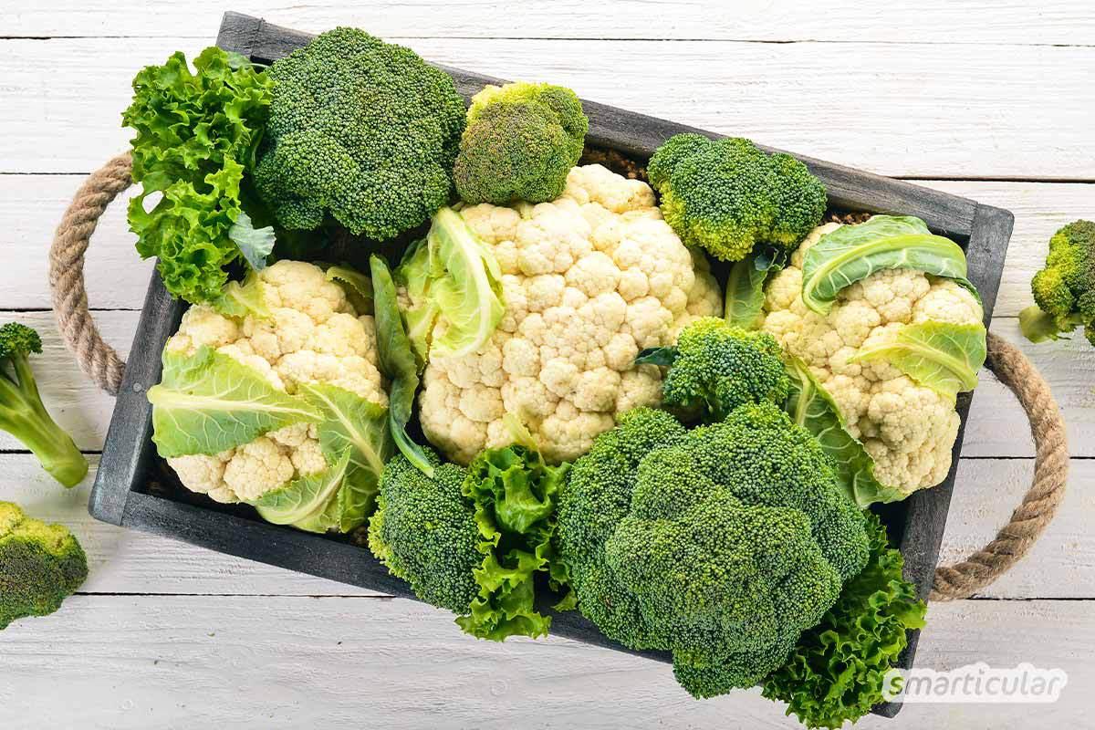 Der Saisonkalender September verrät dir, welche regionale Obst- und Gemüsesorten jetzt reif sind -  zum Beispiel Quitten, Holunderbeeren, verschiedene Kohlsorten und Pilze.
