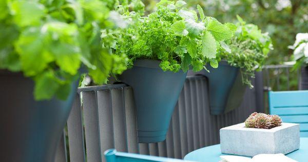 Bist du angespannt oder im Stress? Diese Pflanzen können dir helfen Hektik und blanke Nerven zu überwinden.