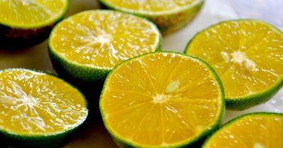 Zitronensäure ist ein nützlicher Haushaltshelfer. Wo gibt es sie zu kaufen, in welchen Mengen und zu welchen Preisen? Worauf du unbedingt achten solltest.