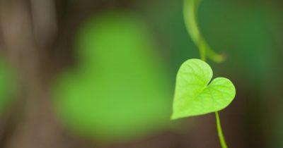 Diese Pflanzen verbessern nicht nur deine Gesundheit, sie bringen auch Freude in die Beziehung.