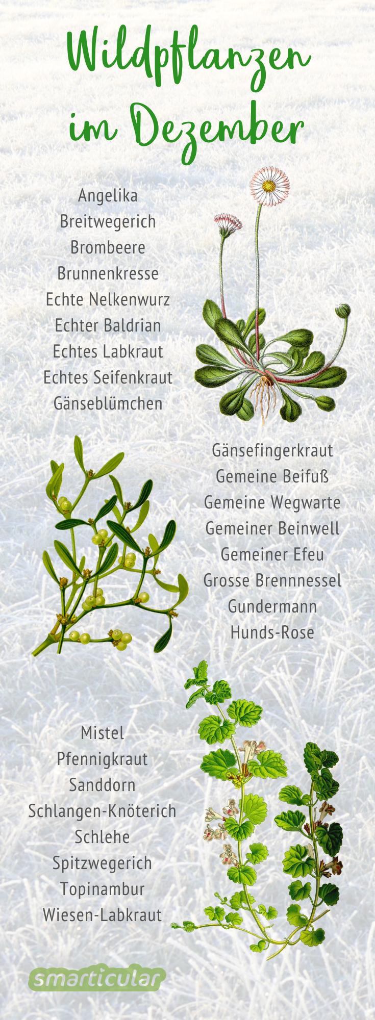 Zwar findet man im Dezember nicht mehr viele verschiedene Wildkräuter. Dennoch lohnt sich das Sammeln noch. Auch Wurzeln und Früchte kann man jetzt ernten.