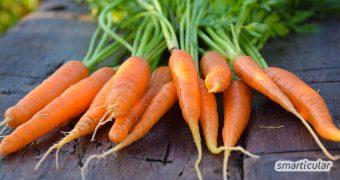 Karotten sind gesund für Augen, Herz, Darm und die Haut. Hier findest du außergewöhnliche Rezepte zur inneren und äußeren Anwendung!