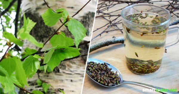 Hellgrüne, zarte Birkenblätter und Knospen sind schon im März zu finden und ein wahrer Segen für unsere Gesundheit. Finde heraus, wie sie dir helfen können.