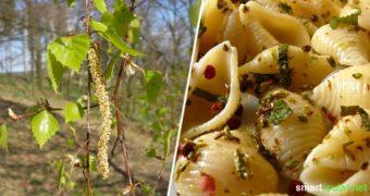 Die jungen Blätter der Birke und ihre Knospen sind vitalstoffreich und können deinen Speiseplan im Frühling hervorragend ergänzen. Hier die besten Rezepte.