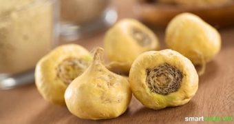 Maca wird in Peru schon lange als wertvolles Nahrungsmittel und Heilmittel geschätzt. Finde heraus, was diese Knolle kann und wie du sie selber anbaust.