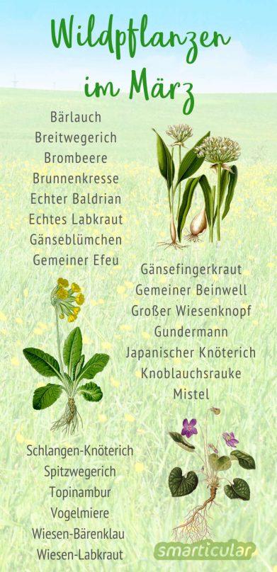 Im März erwachen immer mehr Wildpflanzen aus dem Winterschlaf. Finde heraus, welche Kräuter, Bäume und Sträucher deinen Tisch jetzt bereichern können.