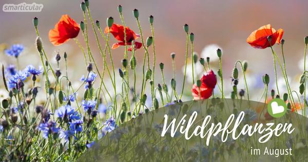 Schmackhaftes aus Feld und Flur: Wildkräuter im August