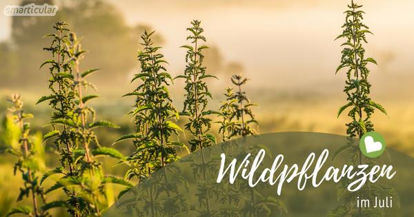 Die Natur beschenkt uns mit den vielfältigsten Bäumen, Sträuchern und Kräutern. Wir müssen nur wissen wo und wann wir die gesunden Pflanzen ernten können.