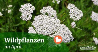Im April lassen sich mehr und mehr Wildkräuter ernten und sammeln. Finde heraus, welche Pflanzen du jetzt nutzen kannst!