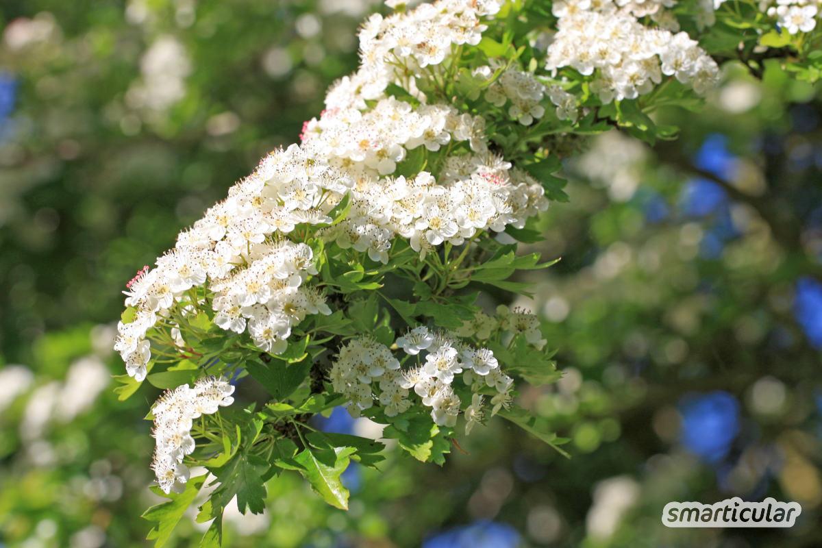 Die Liste der Wildkräuter, die im April gesammelt werden können, ist lang! Hier findest du Wildpflanzen, Blätter und Blüten sowie Tipps zur Verwendung.
