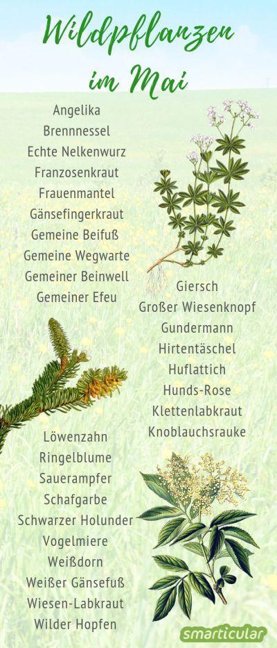 Im Mai ist das Angebot an essbaren Wildkräutern besonders groß. Hier findest du einen umfangreichen Sammelkalender und viele Tipps zur Verwendung des wertvollen Grüns.